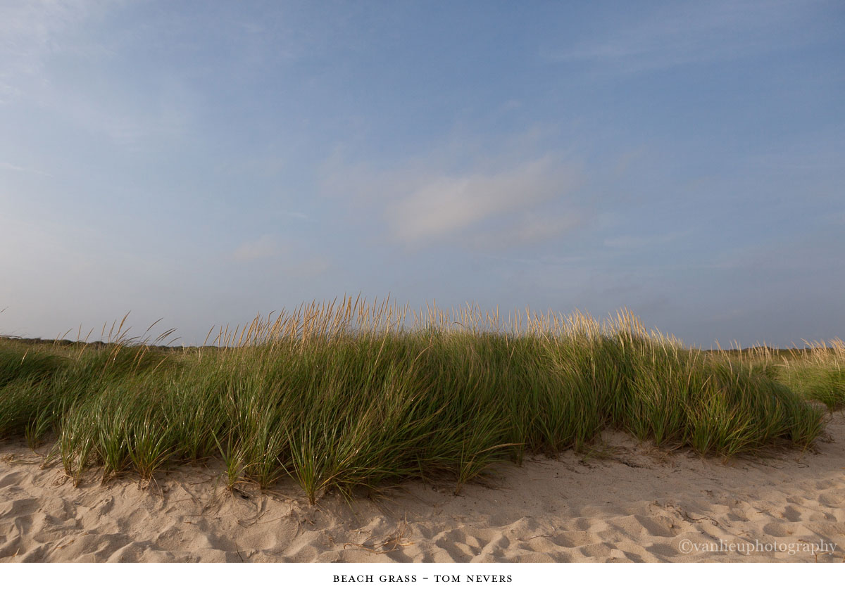 Dunes| Nantucket | Van Lieu Photography 2