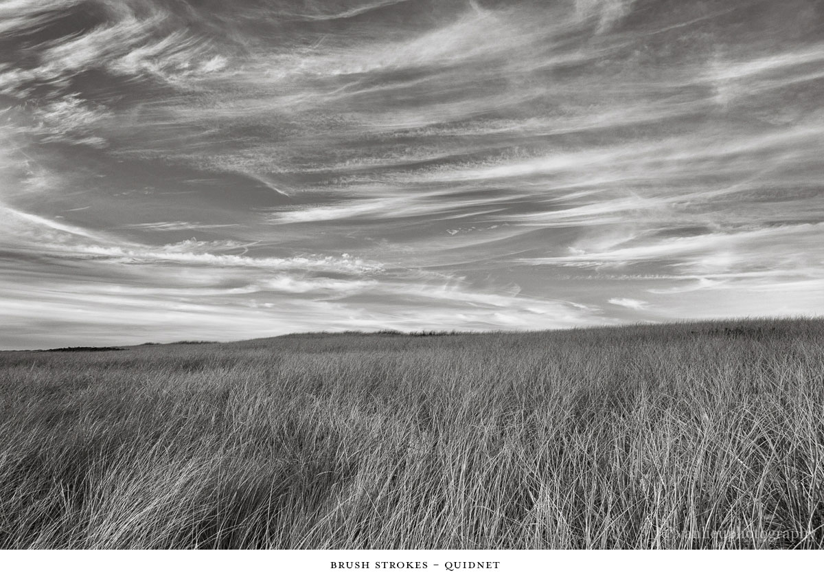 Dunes| Nantucket | Van Lieu Photography 15