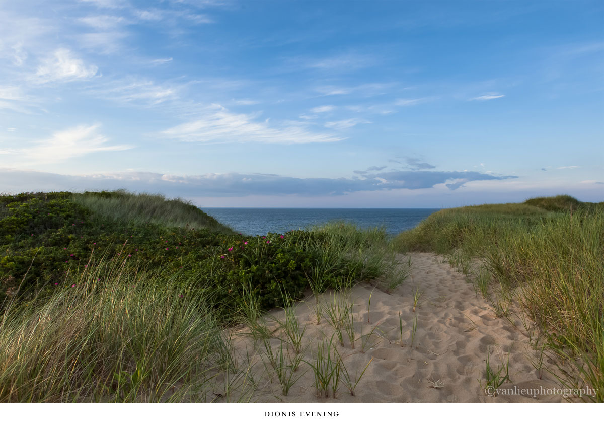 Dunes| Nantucket | Van Lieu Photography 3