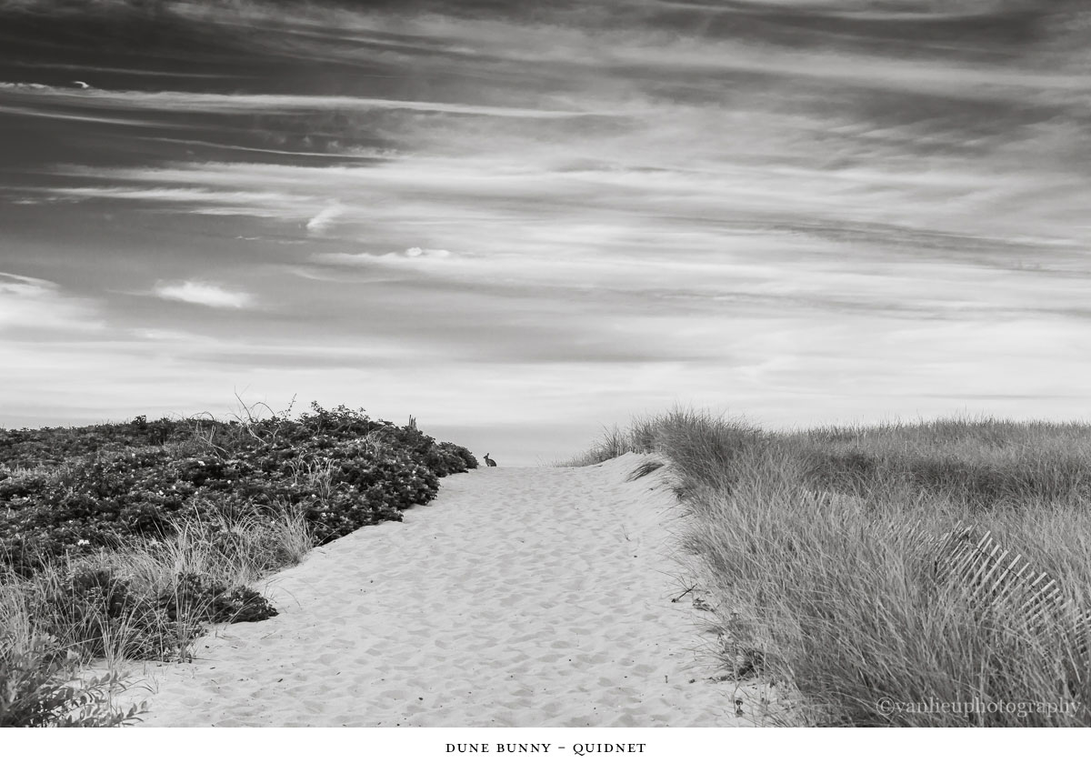 Dunes| Nantucket | Van Lieu Photography 4