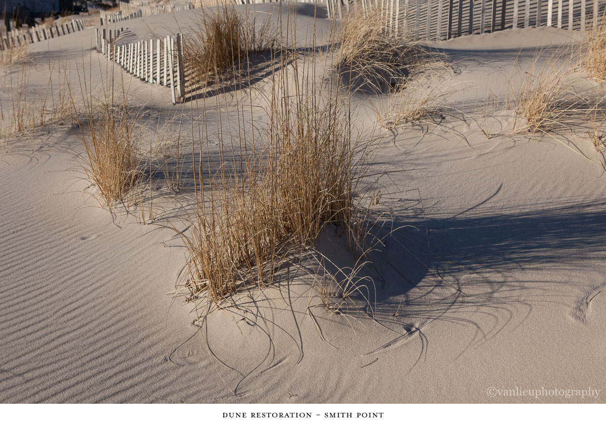 Dunes| Nantucket | Van Lieu Photography 8