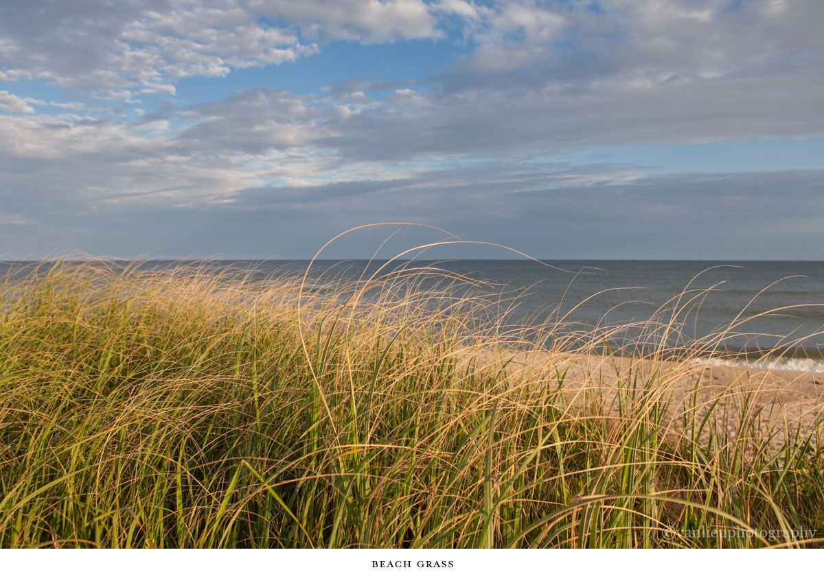 Landscapes | Nantucket | Van Lieu Photography 11