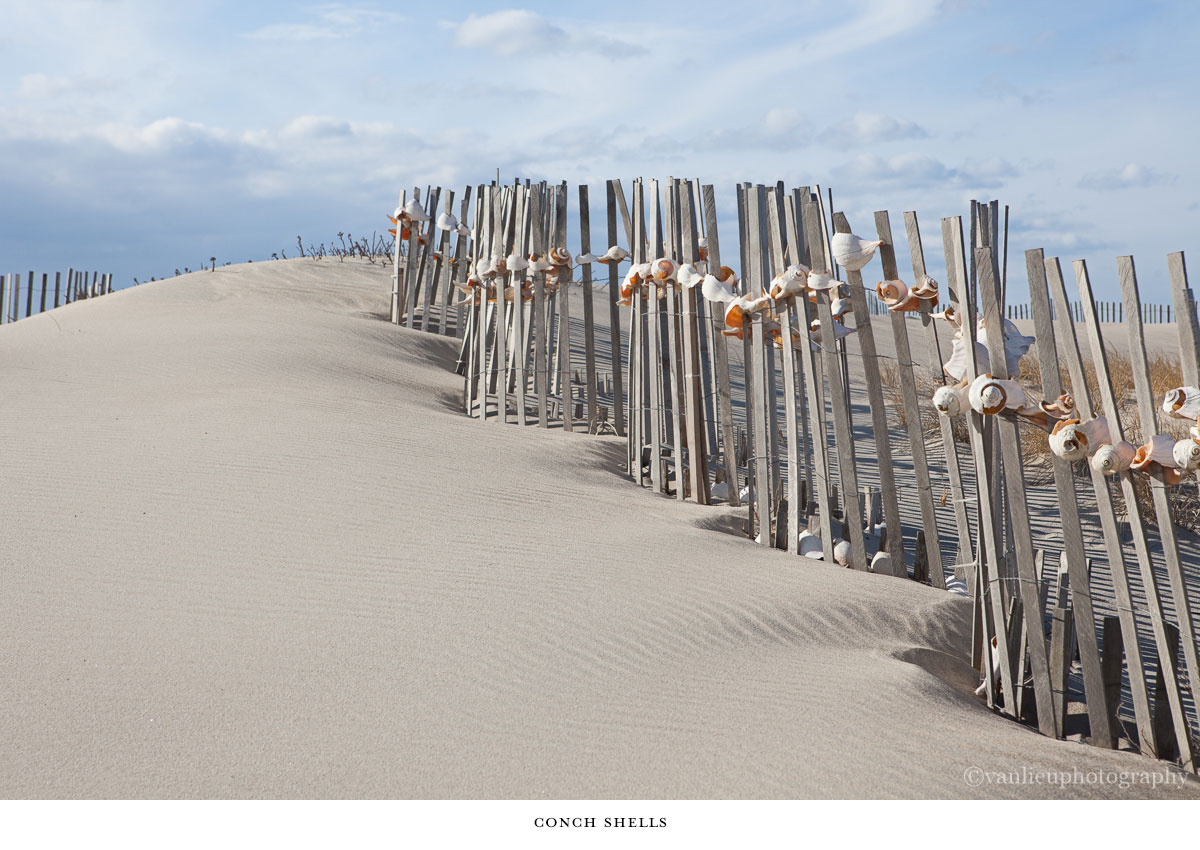 Nantucket Photography | Conch Shells  | Dunes