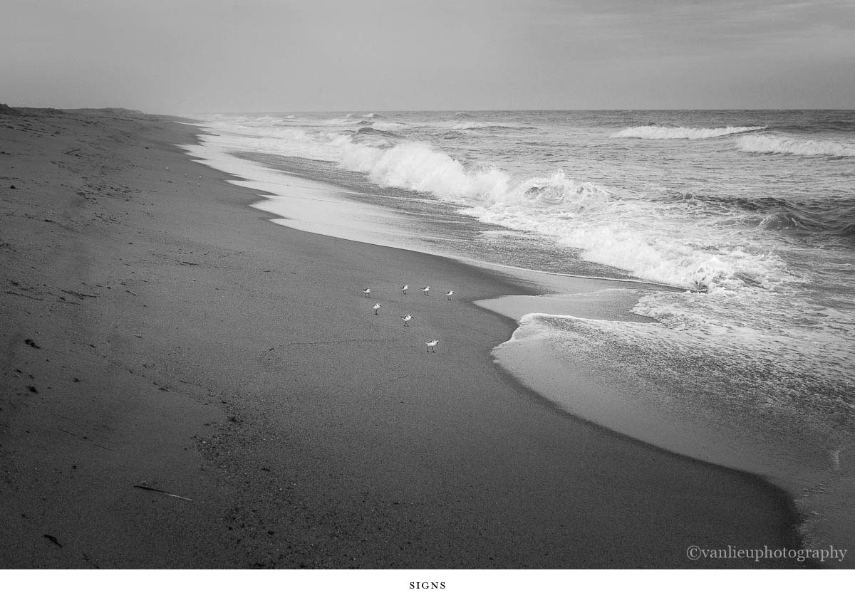 Nature| Nantucket | Van Lieu Photography 11