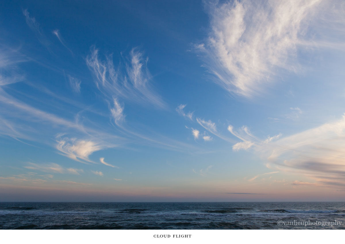 Nature| Nantucket | Van Lieu Photography 15