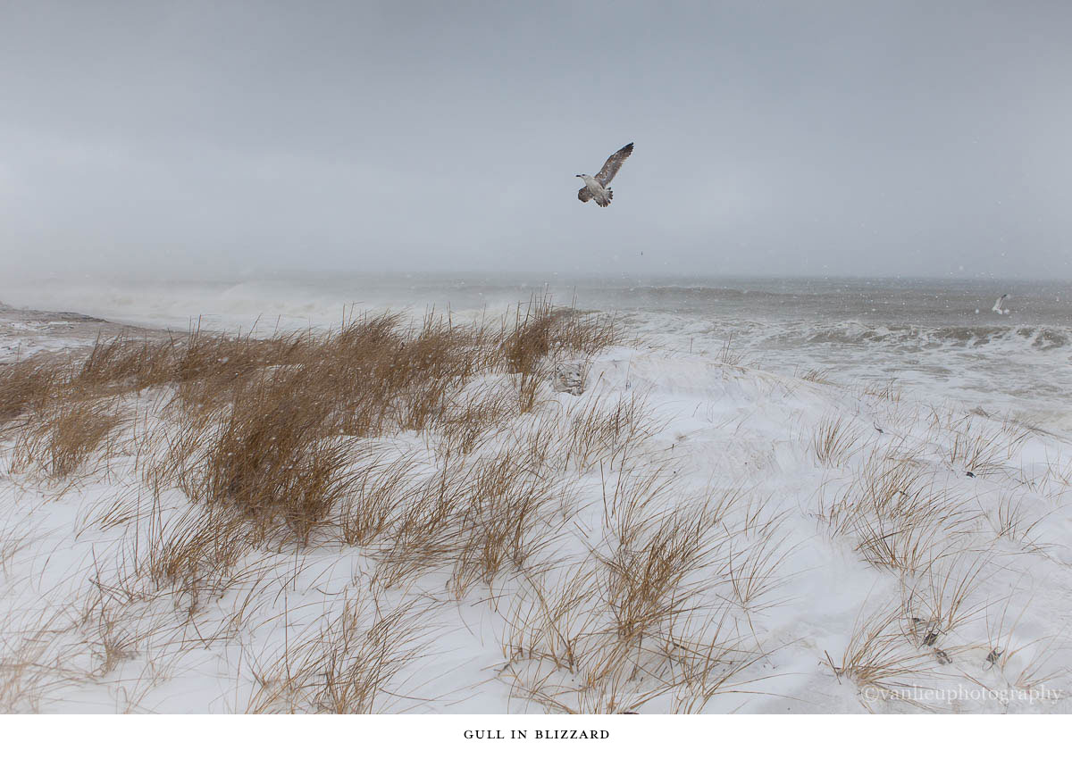 Nature| Nantucket | Van Lieu Photography 5