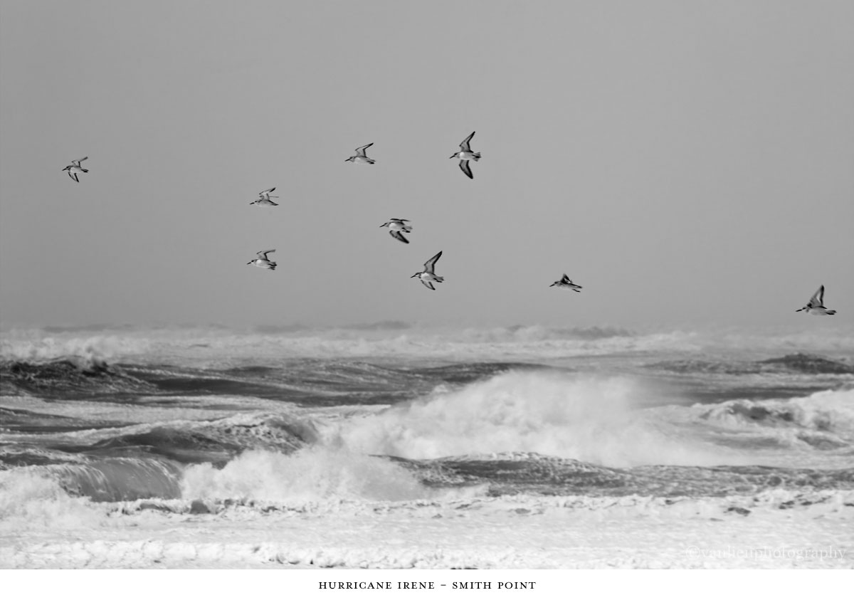 Nature| Nantucket | Van Lieu Photography 6