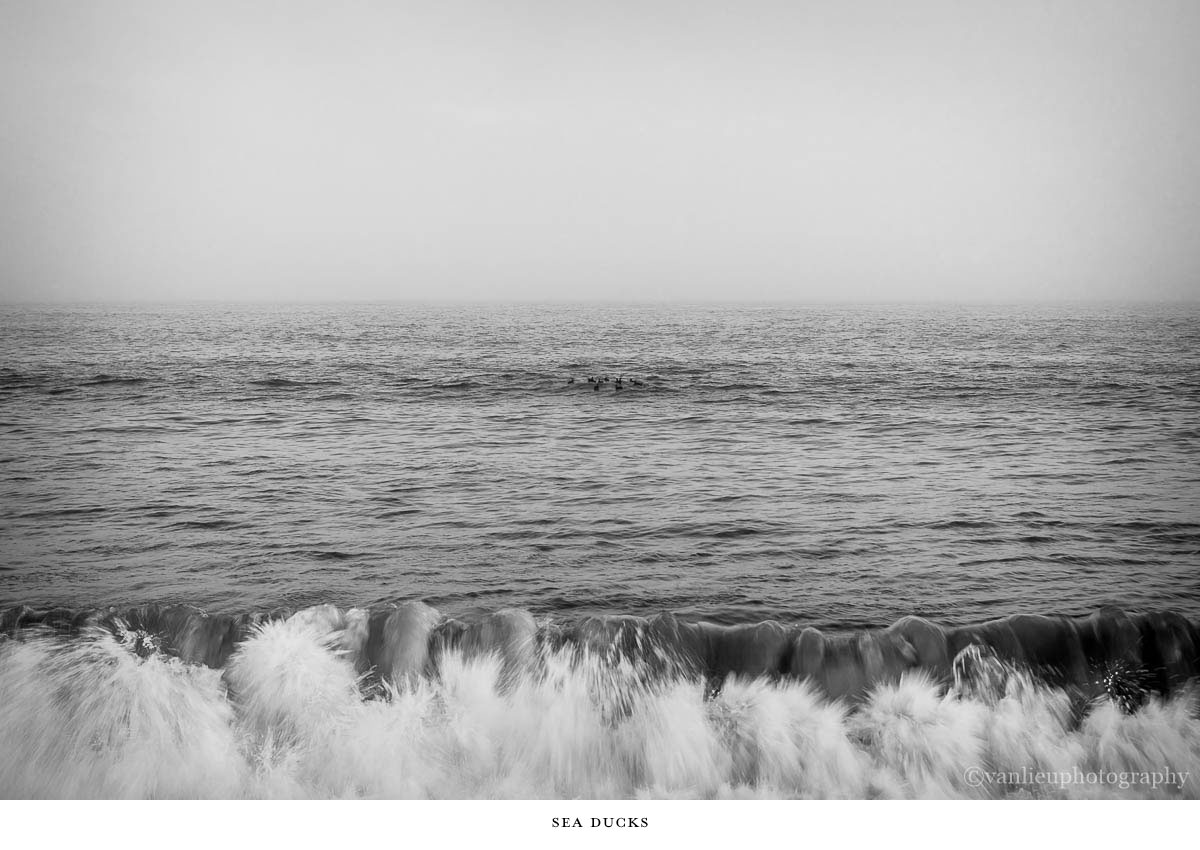 Nature| Nantucket | Van Lieu Photography 7