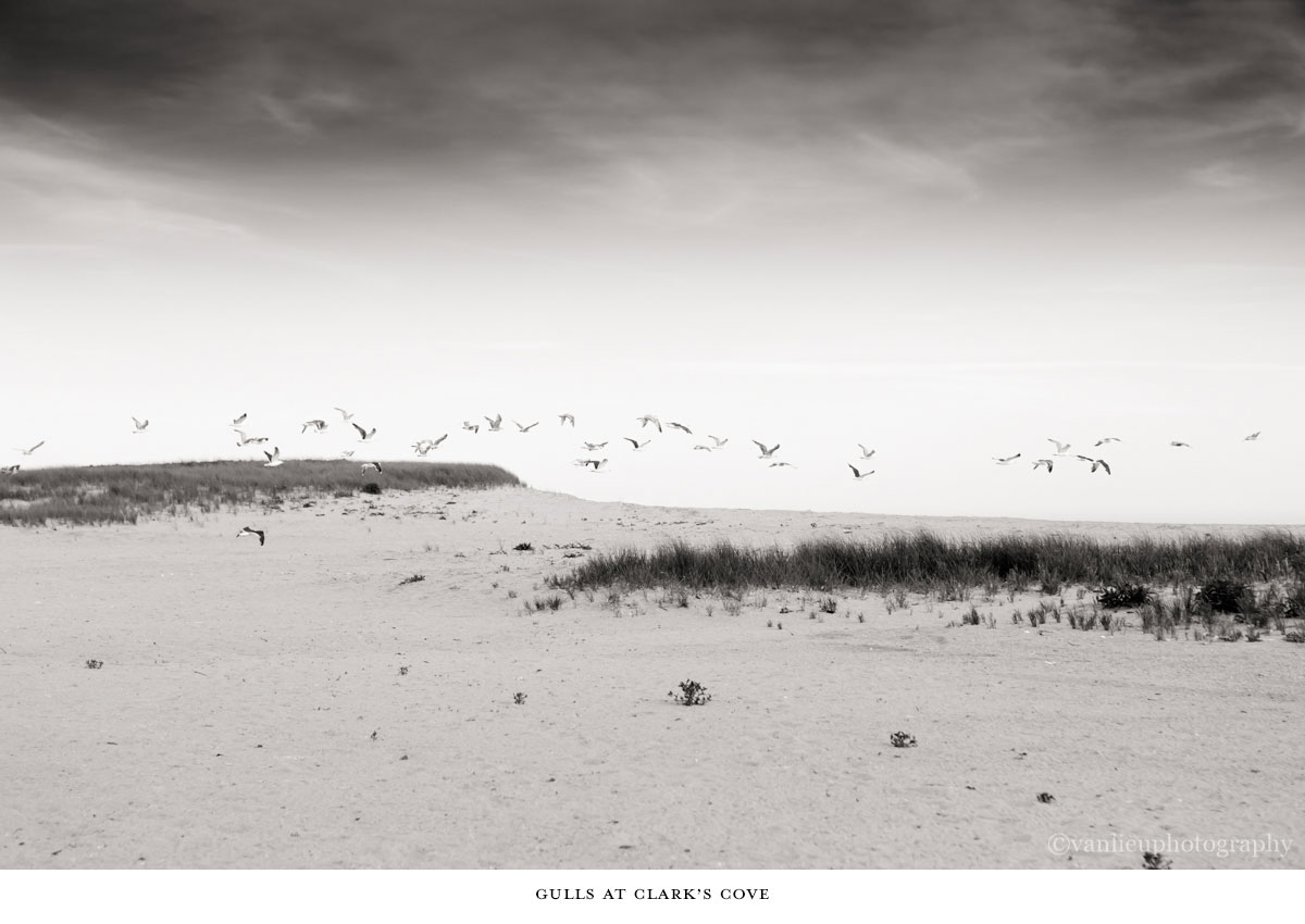 Nature| Nantucket | Van Lieu Photography 8
