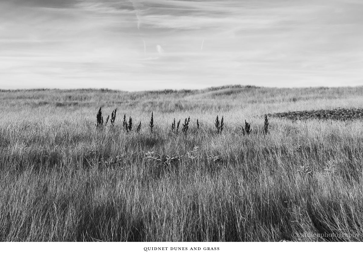 Dunes| Nantucket | Van Lieu Photography 14