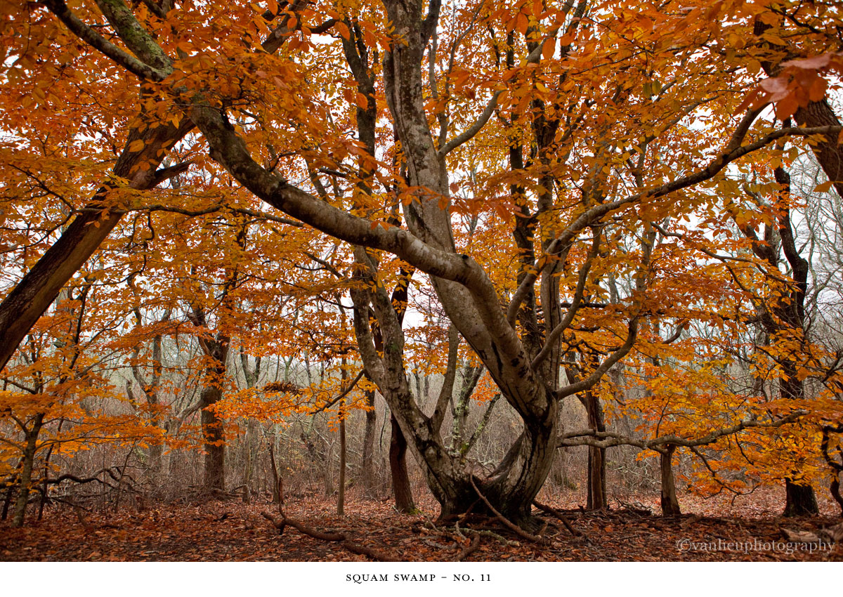 Squam Swamp| Nantucket | Van Lieu Photography 11