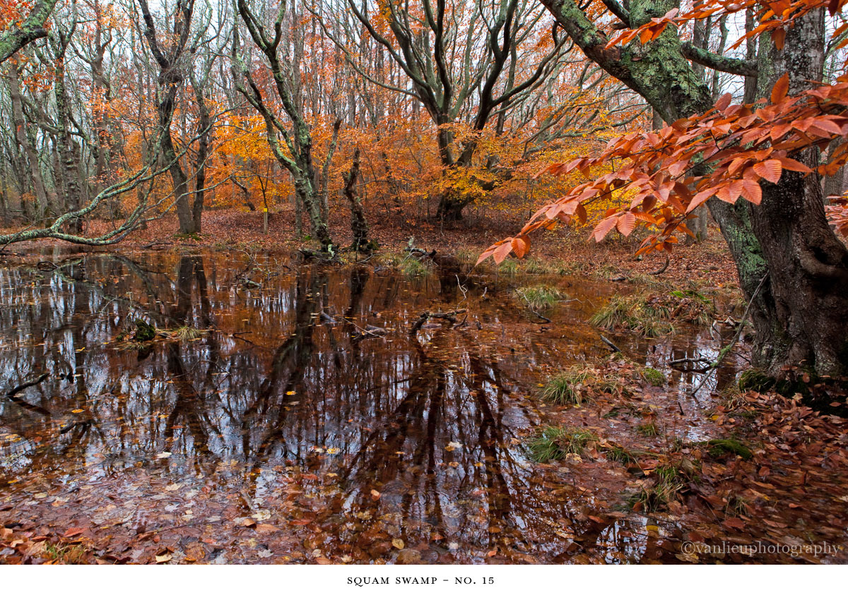 Squam Swamp| Nantucket | Van Lieu Photography 15